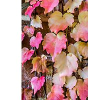 Autumn Leaves - Uralla NSW Australia Photographic Print