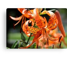 Day Lily After Rain Canvas Print