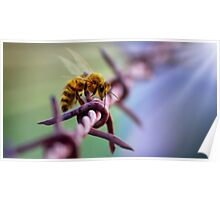 Barb Wire Bee Poster
