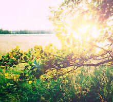 nature back light love by novopics