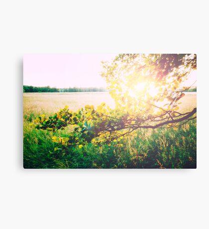 nature back light love Canvas Print