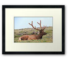 Majestic Elk 2 Framed Print