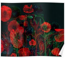 Ghost Poppies  Poster