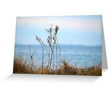 Dry Beach Grass In Winter - Long Island Sound | Montauk, New York Greeting Card