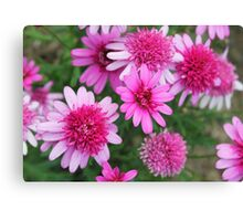 A profusion of pink Canvas Print