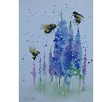 Bumble bees among delphiniums Photographic Print