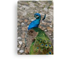 A Flair for the Dramatic Canvas Print