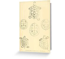 The Reptiles of British India by Albert C L G Gunther 1864 0485 Batagur Elliotti, Basca, Affinis Turtle Greeting Card