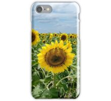 Midday Sunflower Field iPhone Case/Skin