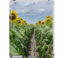 Sunflower Field Row iPad Case/Skin