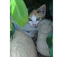 backyard kitten Photographic Print