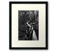 Tree , at night Framed Print
