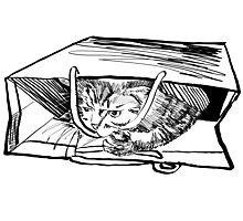 Bag Cat Photographic Print