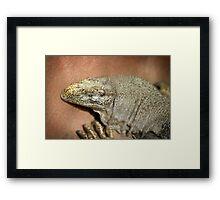 Iguana Framed Print