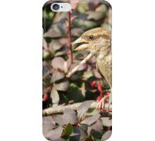 Cute sparrow iPhone Case/Skin