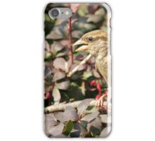 Cute sparrow iPhone Case/Skin