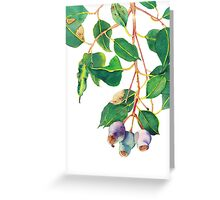 Eucalyptus branch with gumnuts - watercolour Greeting Card