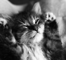 Kitten Sleep by Jaymilina