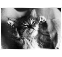 Kitten Sleep Poster
