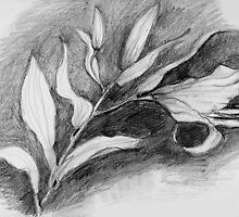 Csa Blanca Lily 2 by Barbara Wyeth
