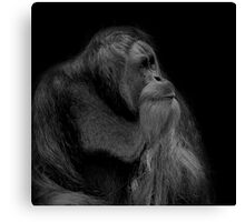 Orangutan Male Looking Up Canvas Print