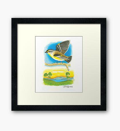 Striated Pardalote Framed Print