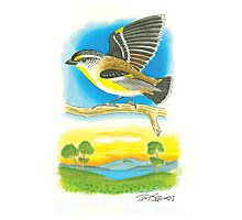 Striated Pardalote Photographic Print