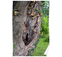 Tree bark detail, natural background. Poster