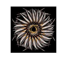 """""""Feathered Flower © Brad Michael Moore 2008"""" Photographic Print"""
