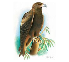 Wedge-tailed Eagle Photographic Print