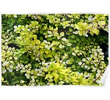 Natural background with small yellow green leaves. Poster