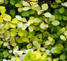 Natural background with small yellow green leaves. Sticker