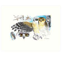 Southern Boobook Owl Art Print