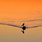 Sunset Silhouette by Truenature