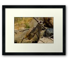 Cute Meerkat Framed Print