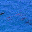 Dolphin Pod by Truenature