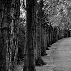 Avenue of trees by crashbangwallop