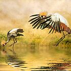 Grey Crowned Cranes. by Tarrby