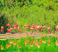 Pretty Flamingos by Chris Thaxter