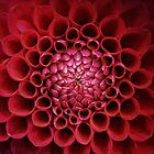 Dahlia Heart by Ludwig Wagner