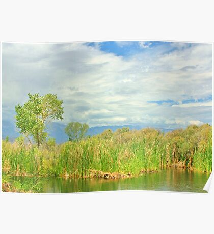 At The Pond Poster