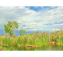 At The Pond Photographic Print