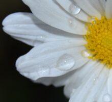 Daisy-Like Sticker