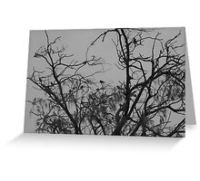 Nature in monochrome Greeting Card