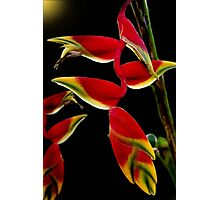 Lobster Claw Photographic Print
