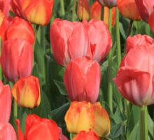 Flower-Bed Of Tulips Sticker