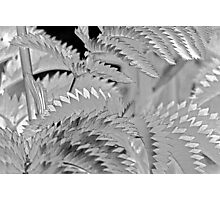 Shimmery, Silvery, Leafy, Zig-Zag - Abstract Photographic Print