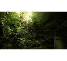 Lydford Walkways Photographic Print