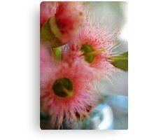 Flowering Coral Gum  Canvas Print