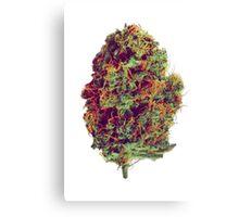 Sticky Bud #23 Canvas Print
